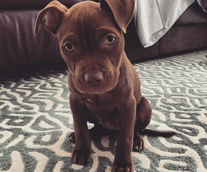 baby, pit, and brown image