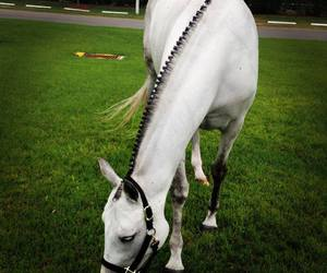horse, white, and cute image