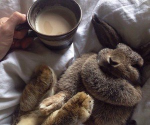coffee, rabbit, and cute image