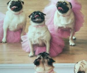 dog, pug, and ballet image