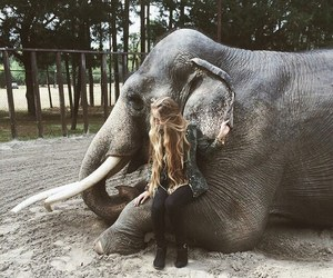 elephant, girl, and photography image