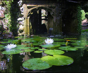 lily pads, nature, and pond image