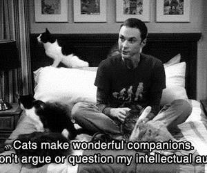 cat, sheldon, and the big bang theory image