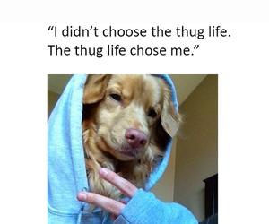 dog, funny, and thug life image