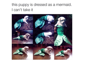 mermaid, dog, and puppy image
