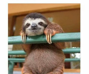 love, funny, and sloth image