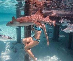 summer, shark, and beach image