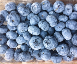 berries, blue, and blueberries image