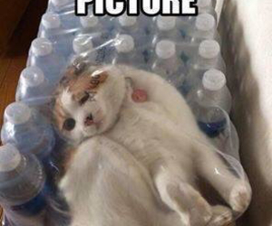 cat, dying, and funny image