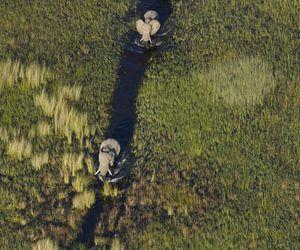 animals, elephants, and johannesburg image
