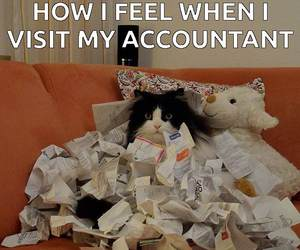 meme, funny cats, and accountant image