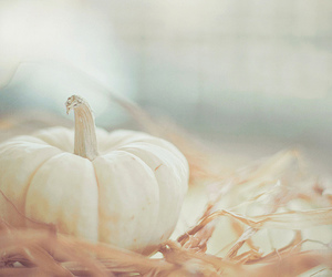 pastel, pumpkin, and autumn image