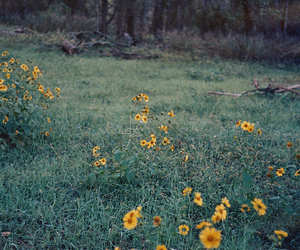 analog, dark, and flowers image