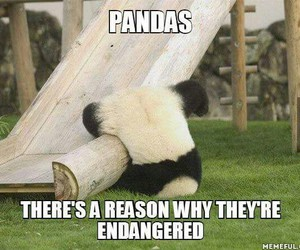 panda, cute, and love image