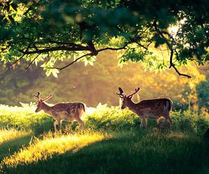 deer, nature, and animal image