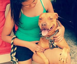 pitbull, puerto rico, and dog love image