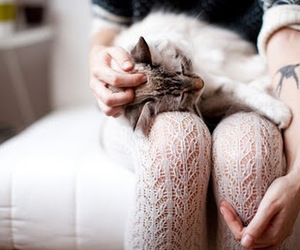 cat, girl, and tights image