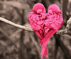 bird, love, and pink image