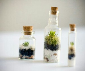 botanical, miniature, and moss image