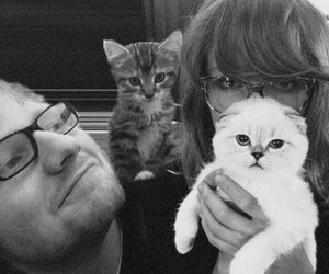 Taylor Swift, ed sheeran, and cat image