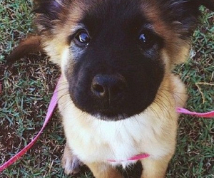 adorable, beautiful, and dogs image