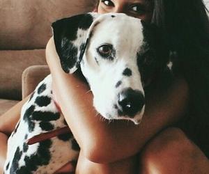 dog, animal, and pretty image