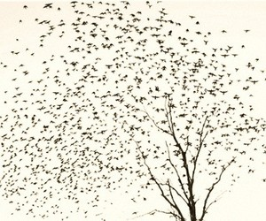 birds, illustration, and tree image