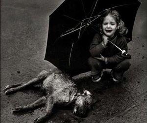 dog, dead, and sad image