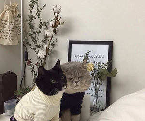 cat, animal, and aesthetic image
