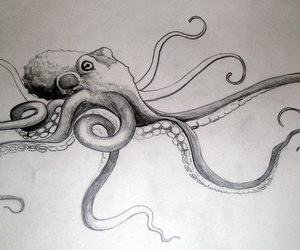 drawing, b w, and octopus image