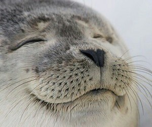 animal, seal, and cute image