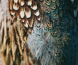feather, bird, and plumage image