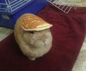 bunny, pancakes, and cute image