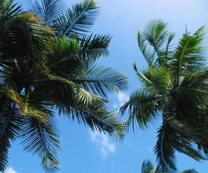 summer, tropical, and palms image