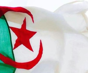 green and algerie image