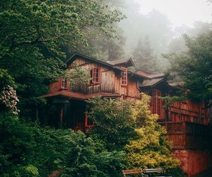 house, fog, and forest image