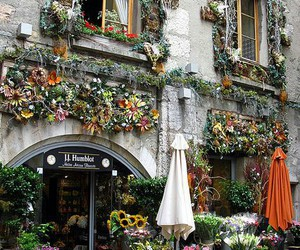 flowers, france, and shop image