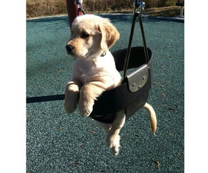 dog, puppy, and swing image