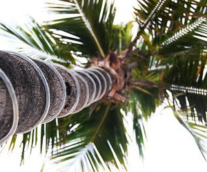 summer, palm trees, and nature image