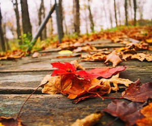 autumn, colorful, and colors image