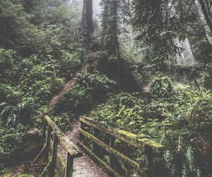 nature, forest, and tree image
