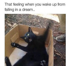 funny, cat, and Dream image