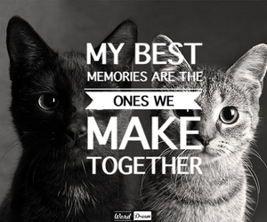 black, white, and cats image