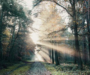 nature, forest, and woods image