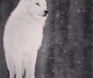 animals, snow, and forests image