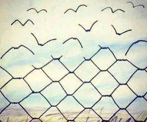 freedom, bird, and free image