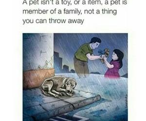 animal, sad, and dog image
