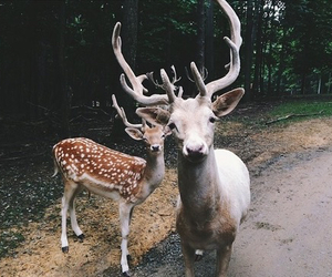 pale, cool, and deer image