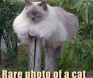 cat, funny, and humor image