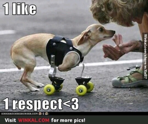 dog and respect image